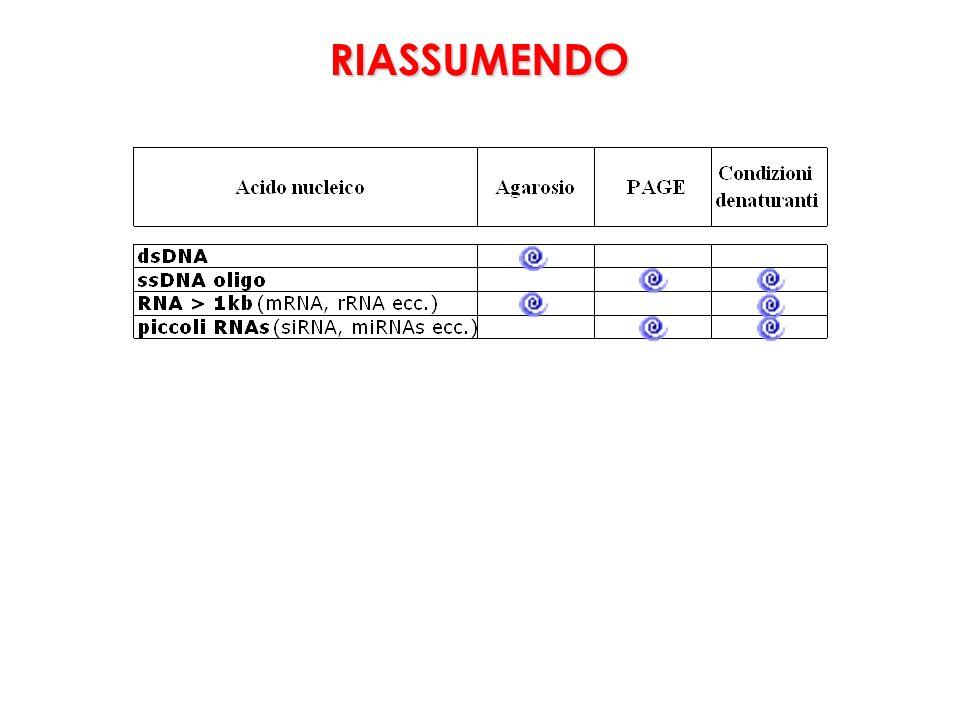 RIASSUMENDO