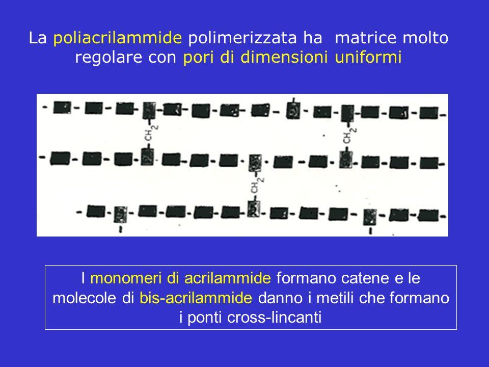 La poliacrilammide polimerizzata ha matrice molto regolare con pori di dimensioni uniformi