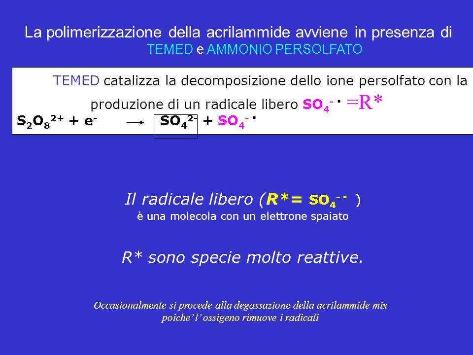 Il radicale libero (R*= SO4- . )