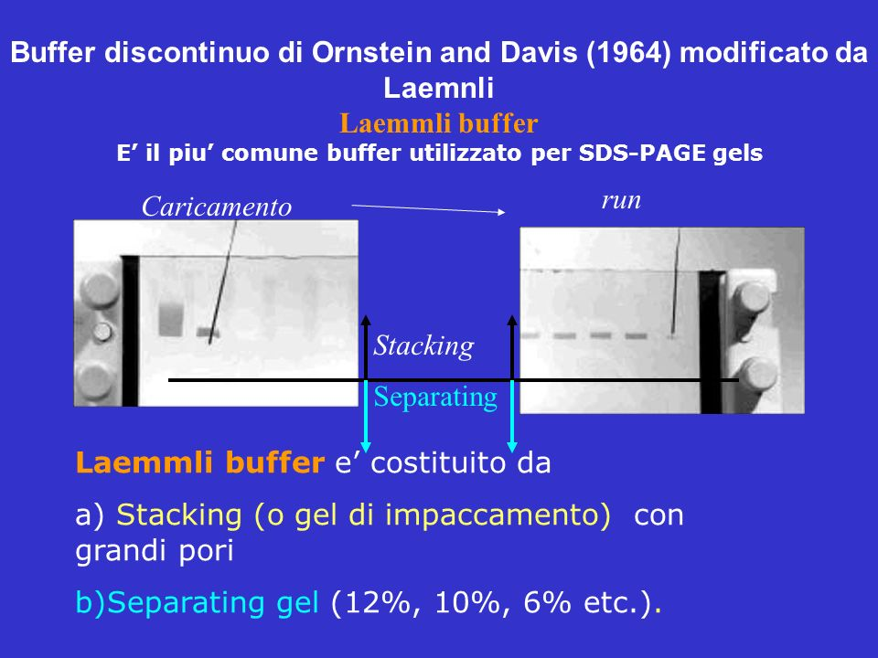 Buffer discontinuo di Ornstein and Davis (1964) modificato da Laemnli