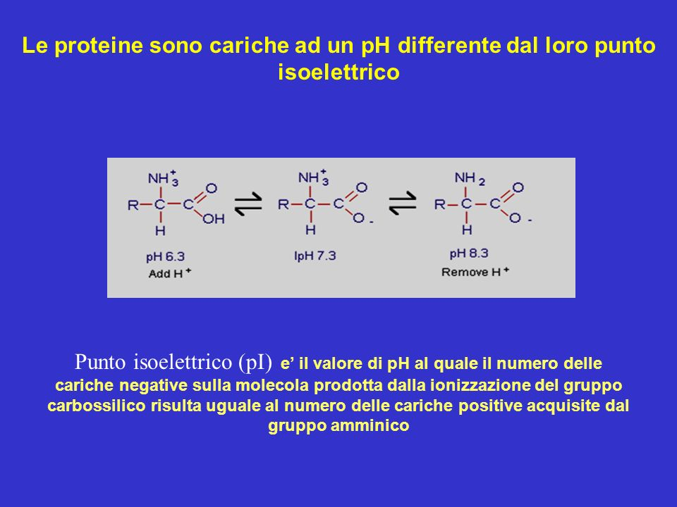 Le proteine sono cariche ad un pH differente dal loro punto isoelettrico