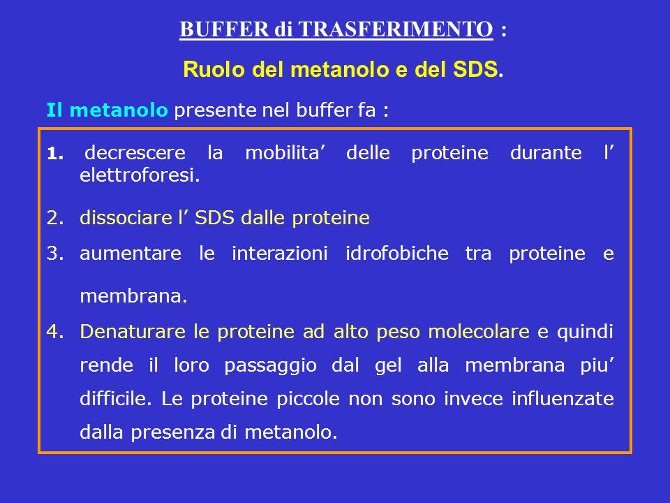 BUFFER di TRASFERIMENTO : Ruolo del metanolo e del SDS.