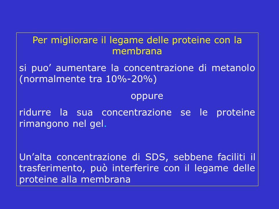 Per migliorare il legame delle proteine con la membrana