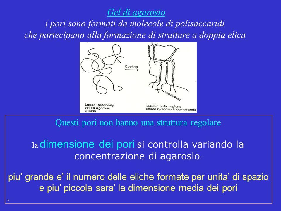 i pori sono formati da molecole di polisaccaridi