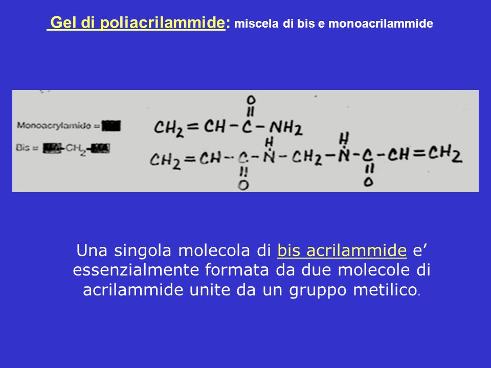 Gel di poliacrilammide: miscela di bis e monoacrilammide