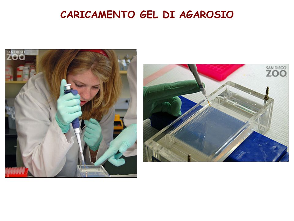 CARICAMENTO GEL DI AGAROSIO