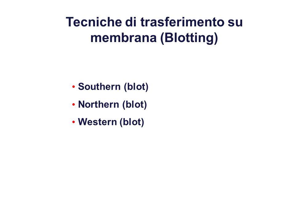 Tecniche di trasferimento su membrana (Blotting)