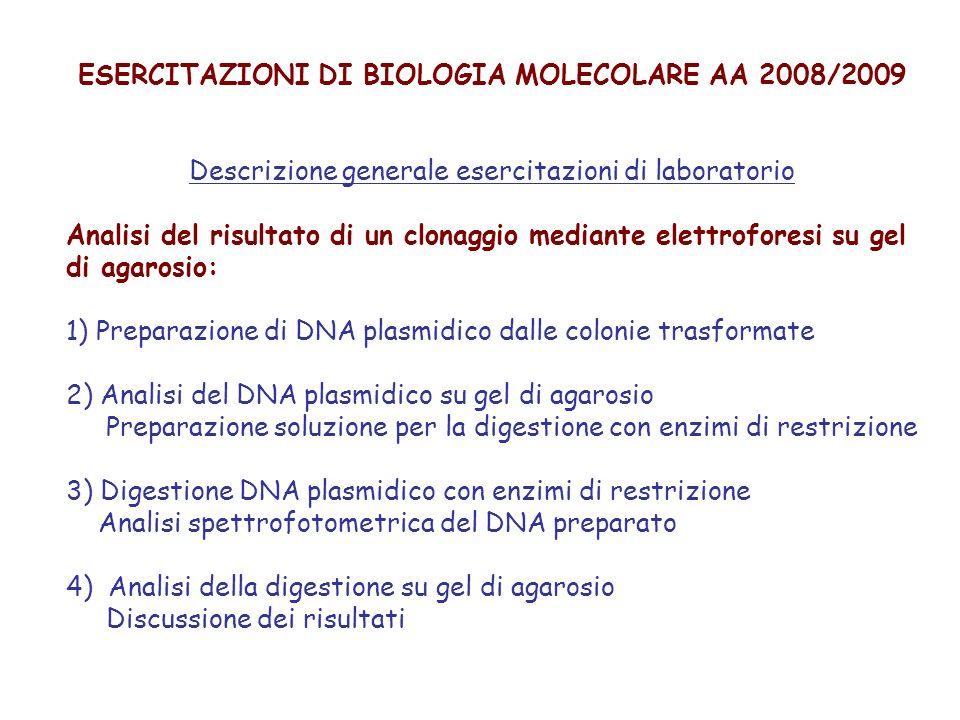 ESERCITAZIONI DI BIOLOGIA MOLECOLARE AA 2008/2009
