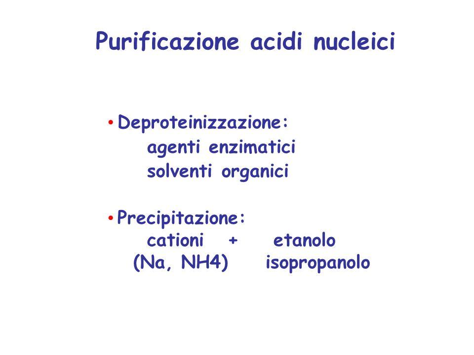 Purificazione acidi nucleici