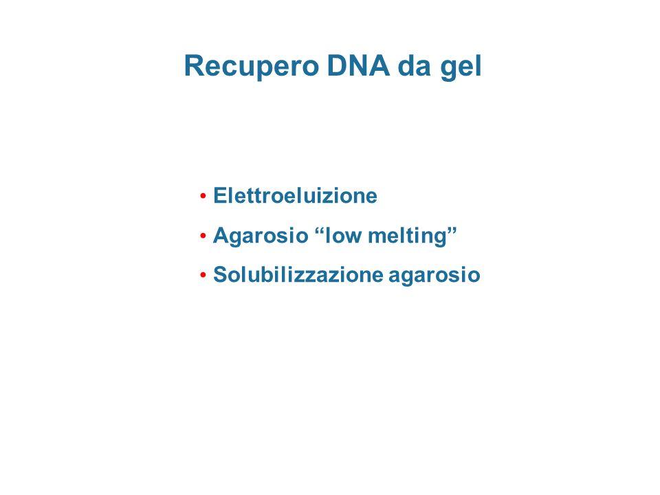 Recupero DNA da gel Elettroeluizione Agarosio low melting