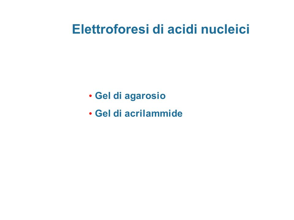 Elettroforesi di acidi nucleici