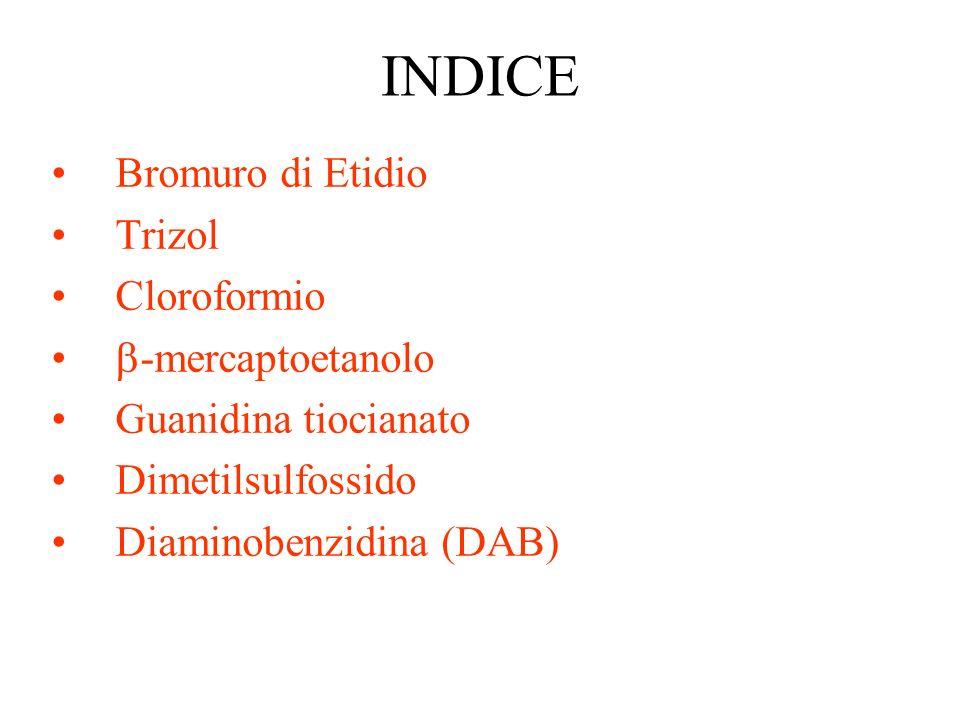 INDICE Bromuro di Etidio Trizol Cloroformio -mercaptoetanolo