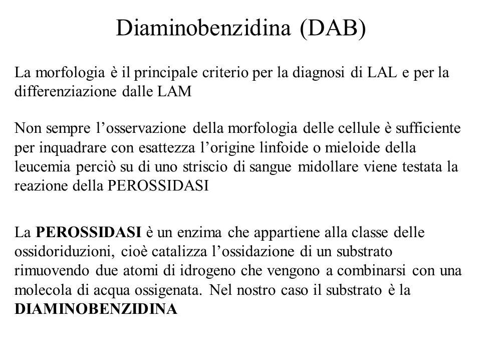 Diaminobenzidina (DAB)