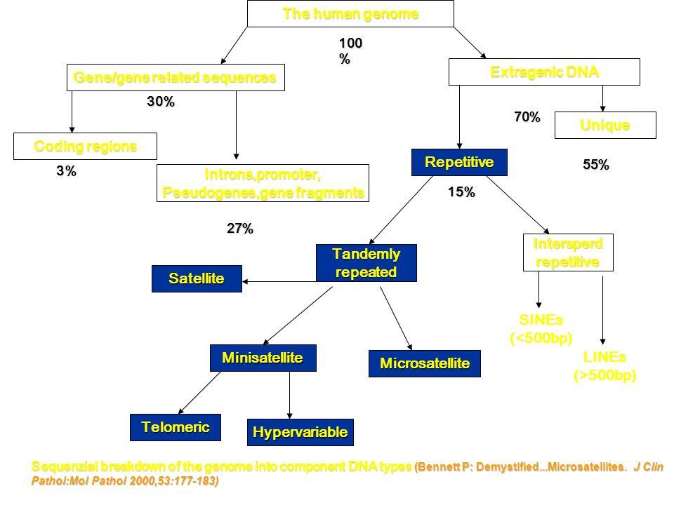 Pseudogenes,gene fragments