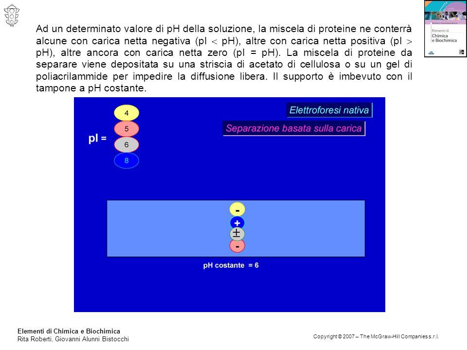 Ad un determinato valore di pH della soluzione, la miscela di proteine ne conterrà alcune con carica netta negativa (pI  pH), altre con carica netta positiva (pI  pH), altre ancora con carica netta zero (pI = pH). La miscela di proteine da separare viene depositata su una striscia di acetato di cellulosa o su un gel di poliacrilammide per impedire la diffusione libera. Il supporto è imbevuto con il tampone a pH costante.