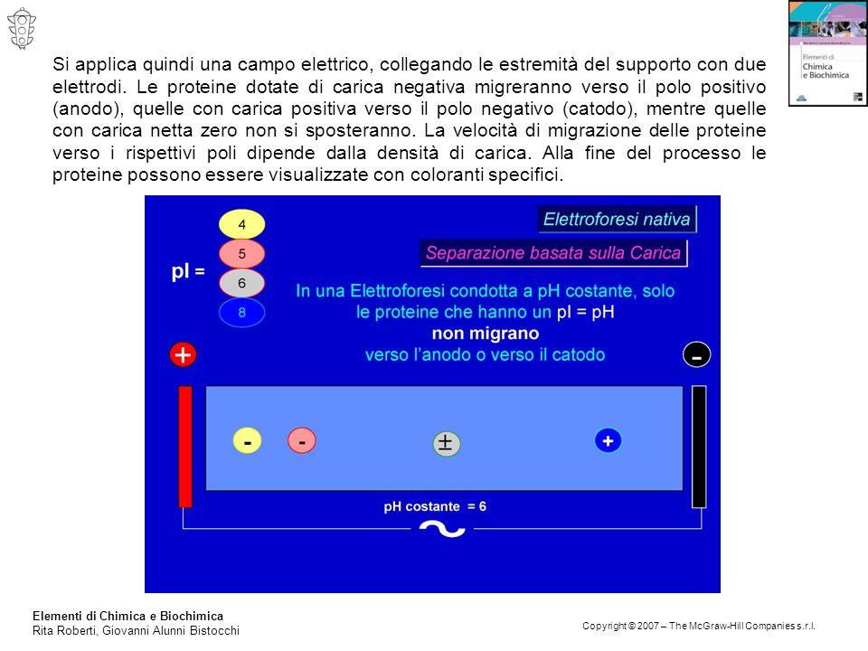 Si applica quindi una campo elettrico, collegando le estremità del supporto con due elettrodi. Le proteine dotate di carica negativa migreranno verso il polo positivo (anodo), quelle con carica positiva verso il polo negativo (catodo), mentre quelle con carica netta zero non si sposteranno. La velocità di migrazione delle proteine verso i rispettivi poli dipende dalla densità di carica. Alla fine del processo le proteine possono essere visualizzate con coloranti specifici.