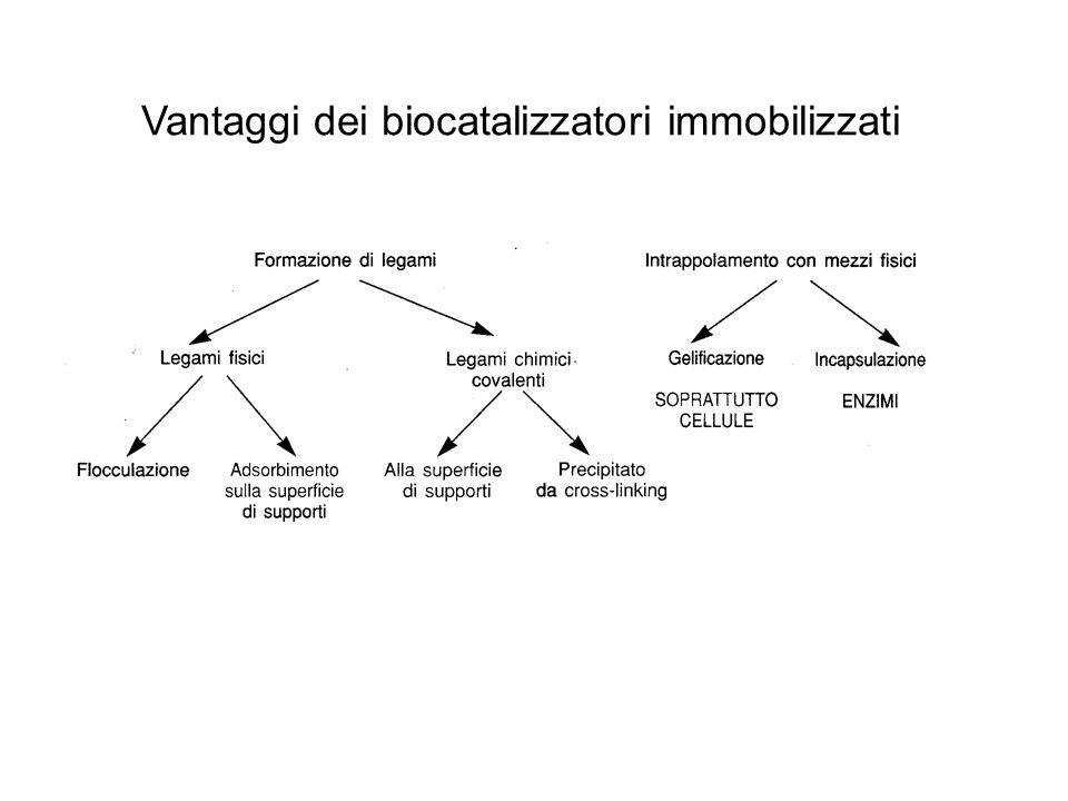 Vantaggi dei biocatalizzatori immobilizzati