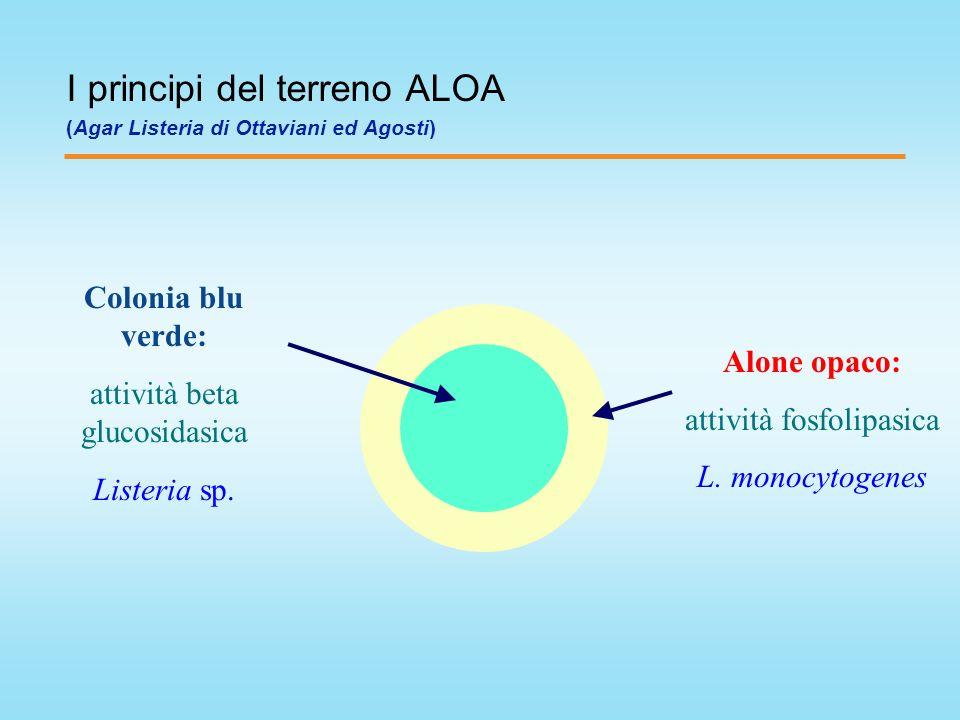 I principi del terreno ALOA (Agar Listeria di Ottaviani ed Agosti)