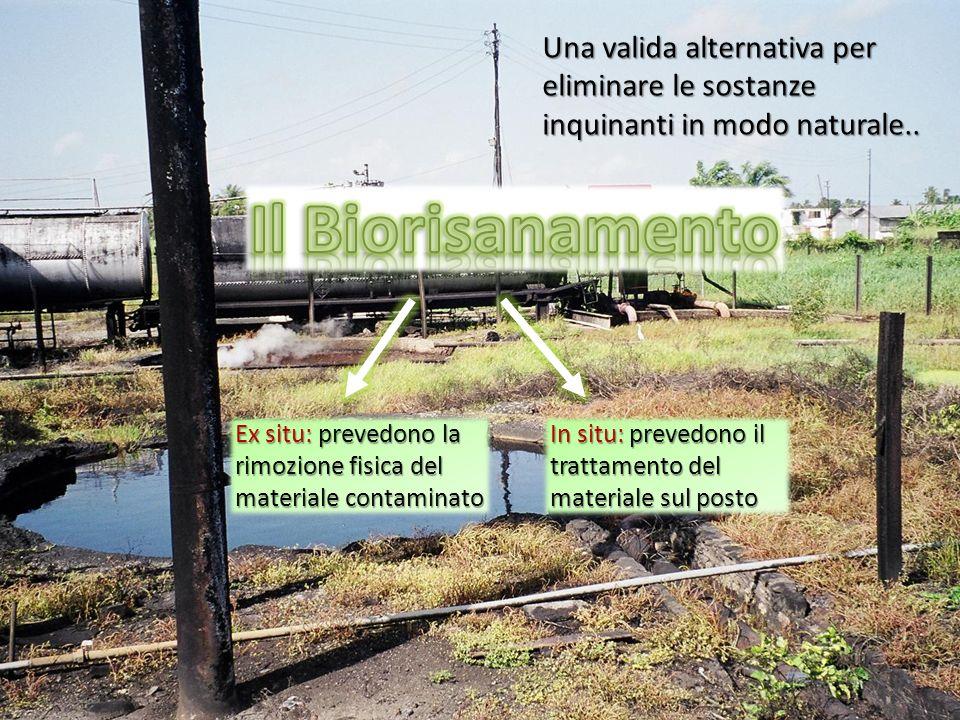 Una valida alternativa per eliminare le sostanze inquinanti in modo naturale..