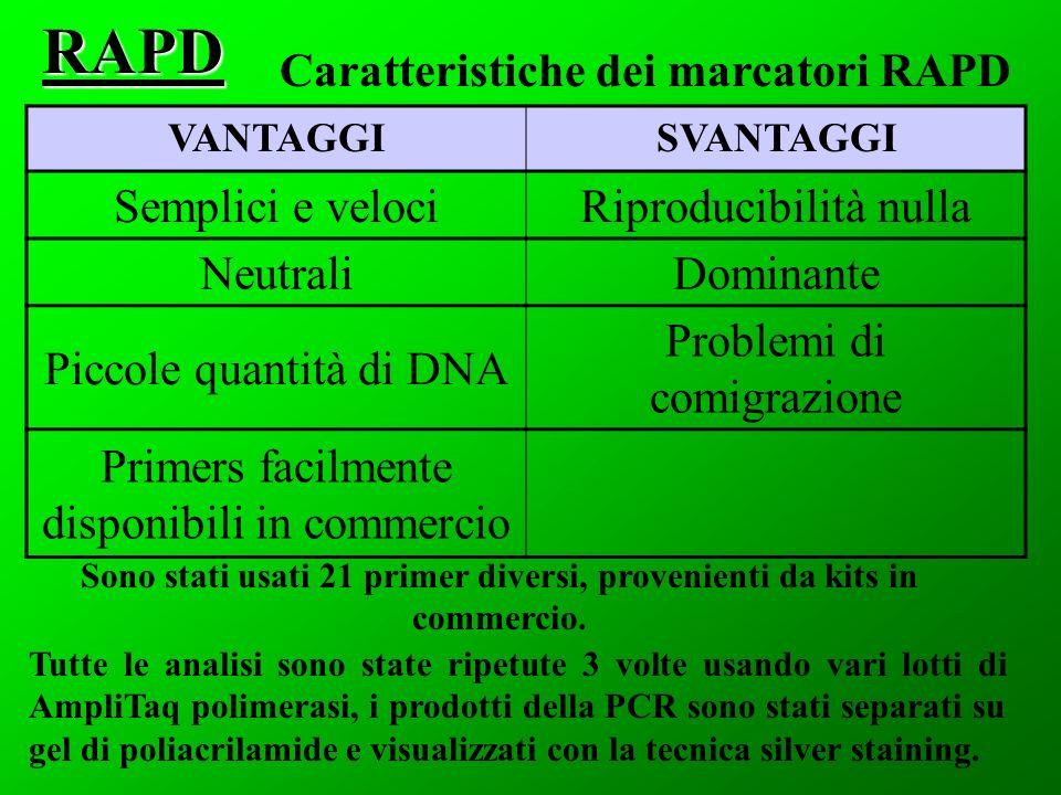 RAPD Caratteristiche dei marcatori RAPD Semplici e veloci
