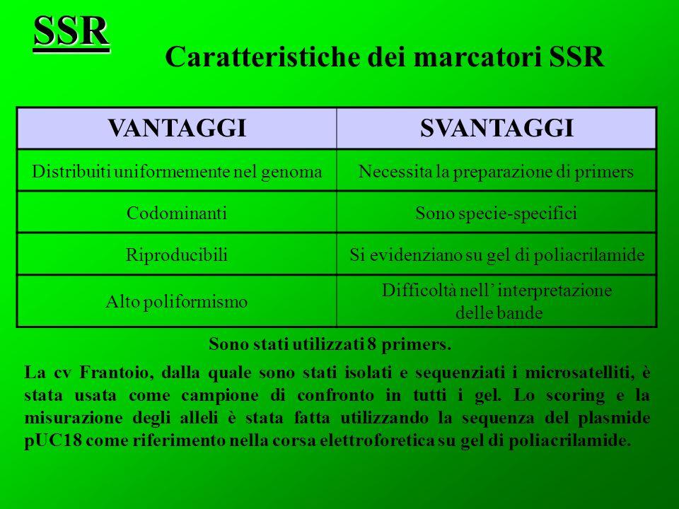 Caratteristiche dei marcatori SSR
