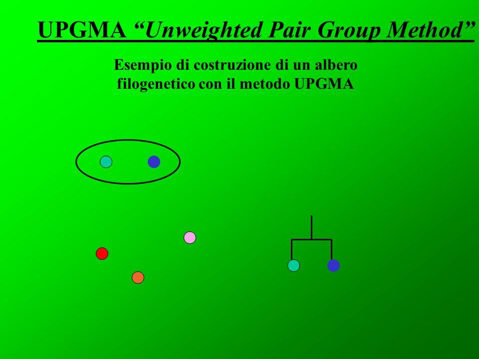 Esempio di costruzione di un albero filogenetico con il metodo UPGMA