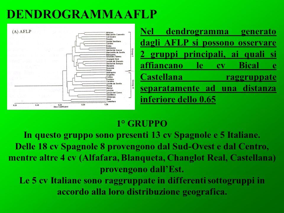 DENDROGRAMMA AFLP