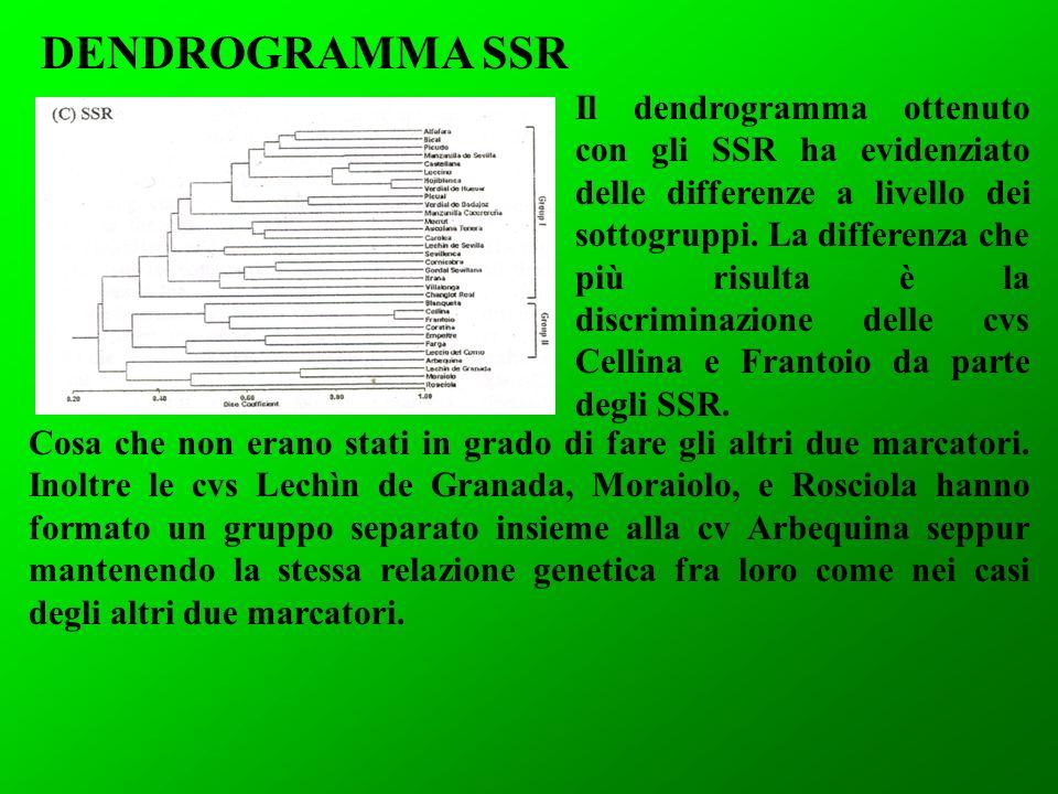DENDROGRAMMA SSR
