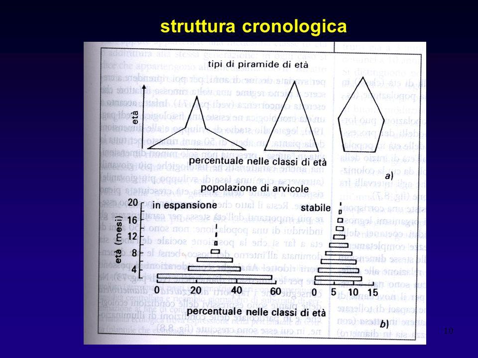 struttura cronologica