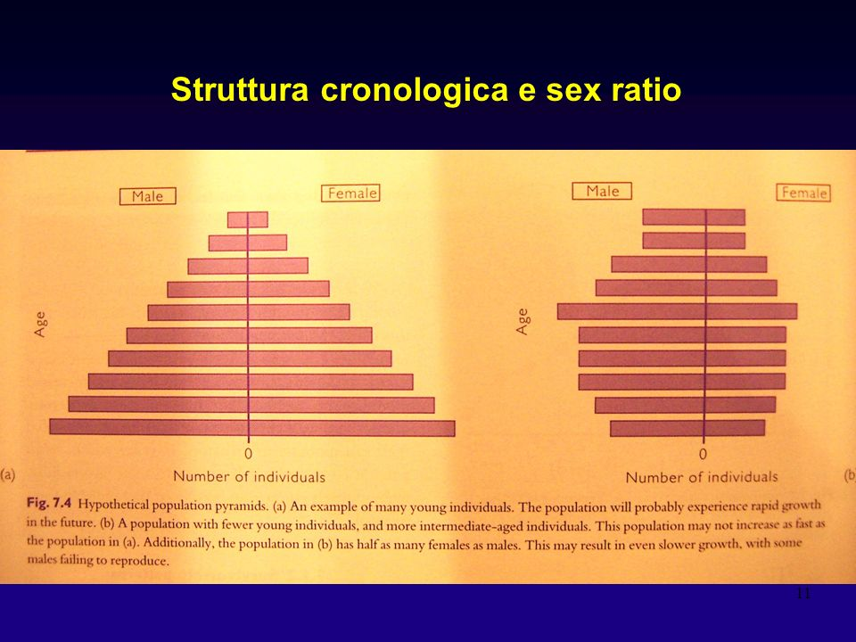 Struttura cronologica e sex ratio