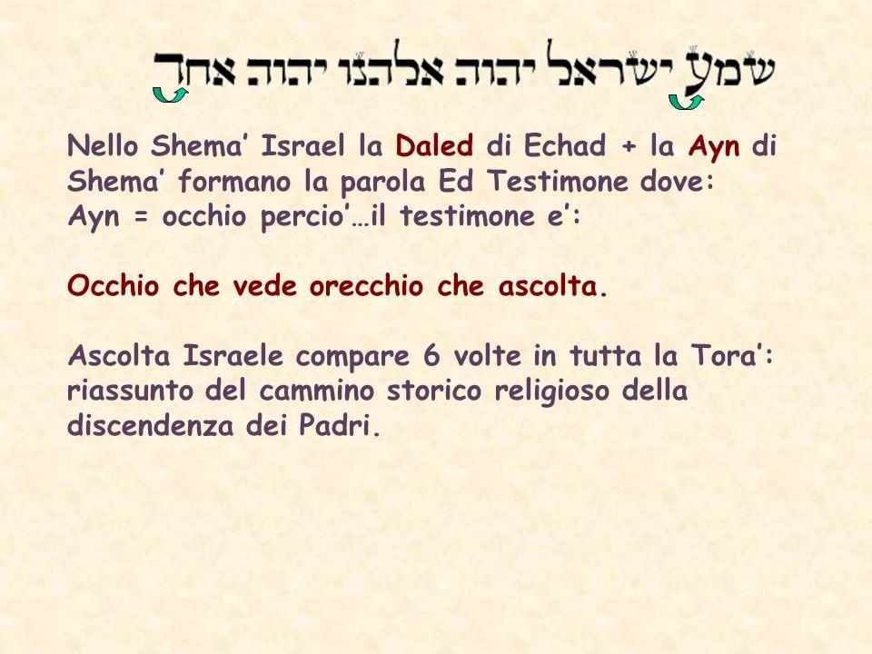 Nello Shema' Israel la Daled di Echad + la Ayn di Shema' formano la parola Ed Testimone dove: