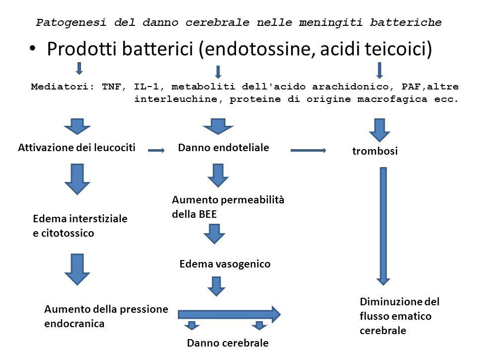 Patogenesi del danno cerebrale nelle meningiti batteriche
