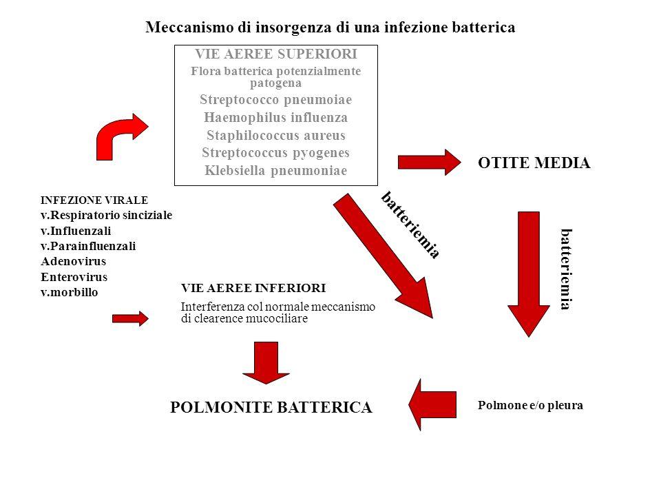 Meccanismo di insorgenza di una infezione batterica
