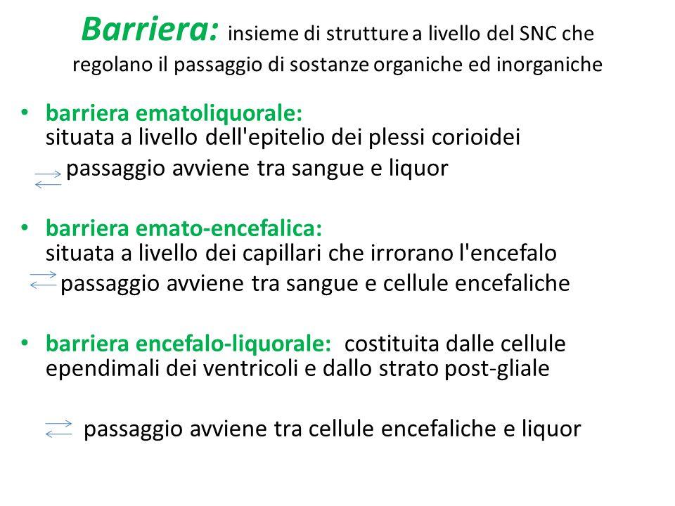 Barriera: insieme di strutture a livello del SNC che regolano il passaggio di sostanze organiche ed inorganiche