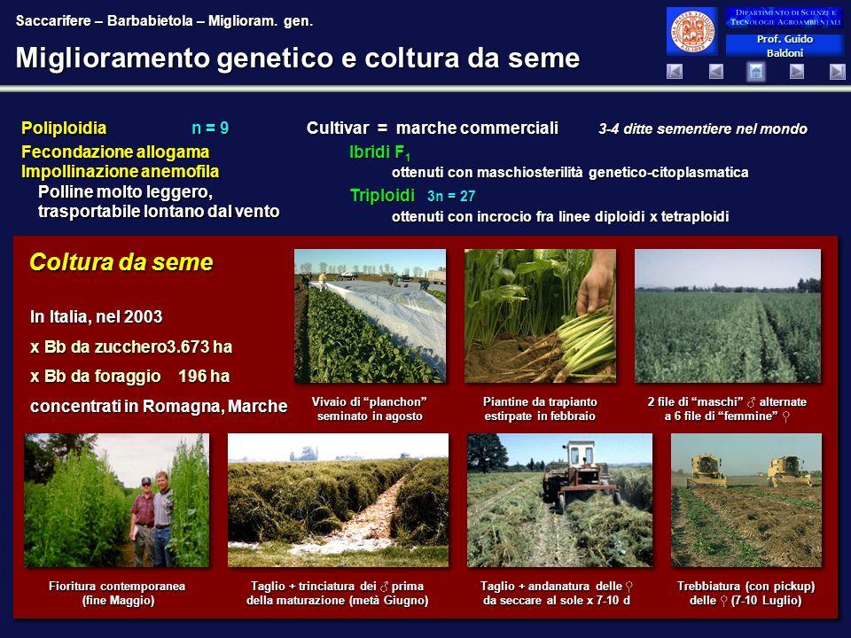 Miglioramento genetico e coltura da seme