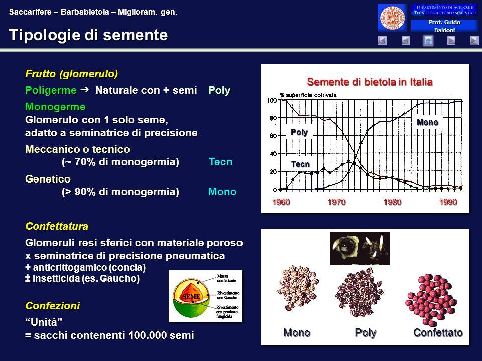 Tipologie di semente Frutto (glomerulo)