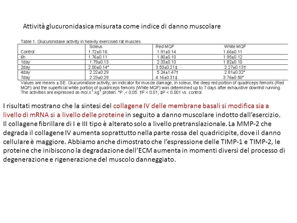 Attività glucuronidasica misurata come indice di danno muscolare