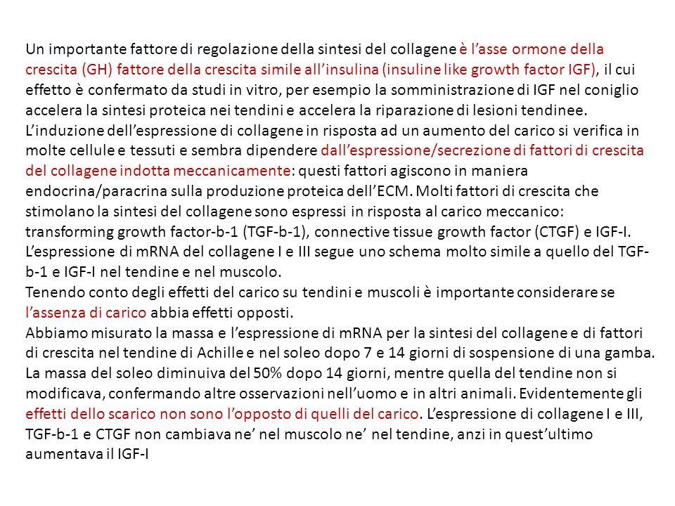 Un importante fattore di regolazione della sintesi del collagene è l'asse ormone della crescita (GH) fattore della crescita simile all'insulina (insuline like growth factor IGF), il cui effetto è confermato da studi in vitro, per esempio la somministrazione di IGF nel coniglio accelera la sintesi proteica nei tendini e accelera la riparazione di lesioni tendinee. L'induzione dell'espressione di collagene in risposta ad un aumento del carico si verifica in molte cellule e tessuti e sembra dipendere dall'espressione/secrezione di fattori di crescita del collagene indotta meccanicamente: questi fattori agiscono in maniera endocrina/paracrina sulla produzione proteica dell'ECM. Molti fattori di crescita che stimolano la sintesi del collagene sono espressi in risposta al carico meccanico: transforming growth factor-b-1 (TGF-b-1), connective tissue growth factor (CTGF) e IGF-I. L'espressione di mRNA del collagene I e III segue uno schema molto simile a quello del TGF-b-1 e IGF-I nel tendine e nel muscolo.