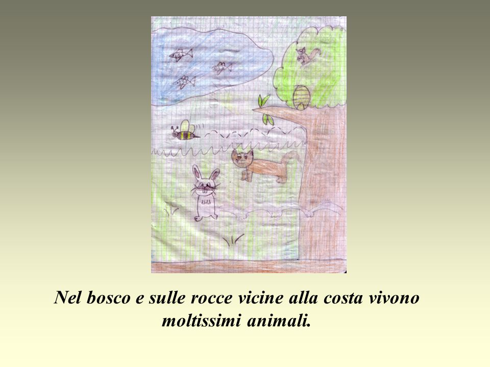 Nel bosco e sulle rocce vicine alla costa vivono moltissimi animali.