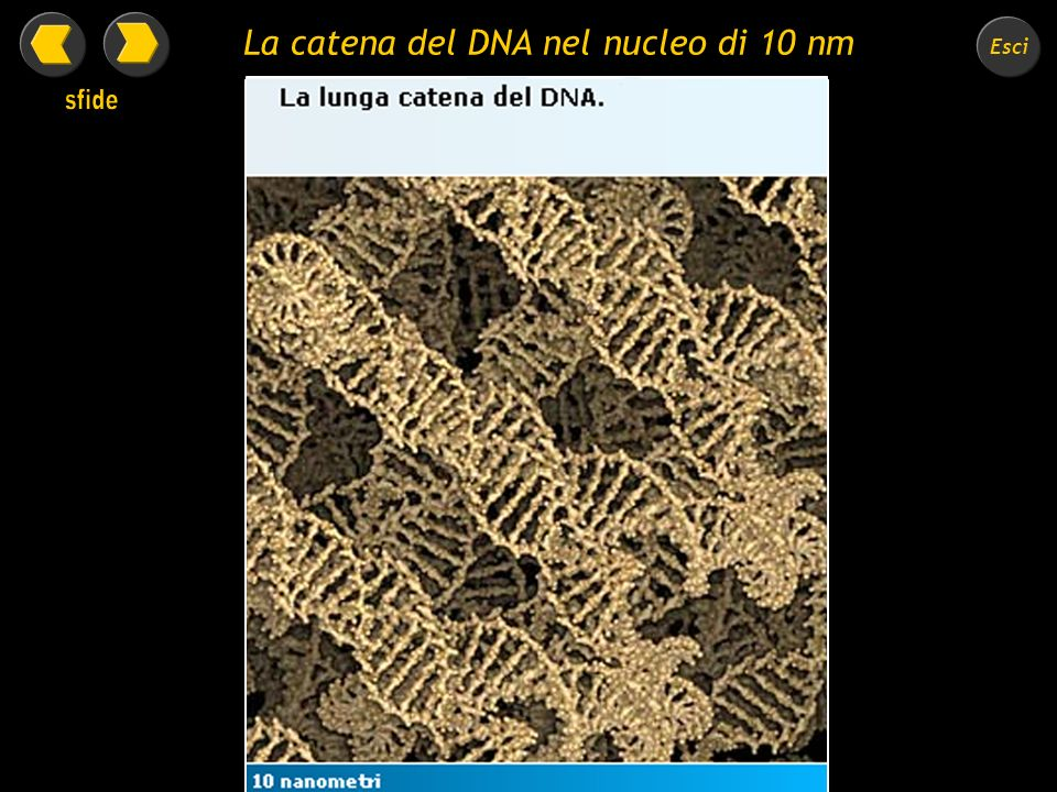 La catena del DNA nel nucleo di 10 nm