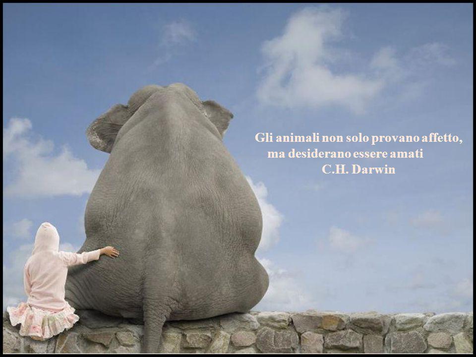 Gli animali non solo provano affetto, ma desiderano essere amati