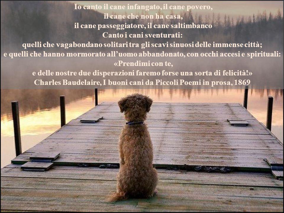 Non sempre l 39 amico del cuore fa parte del genere umano for Casa progetta il trotto del cane