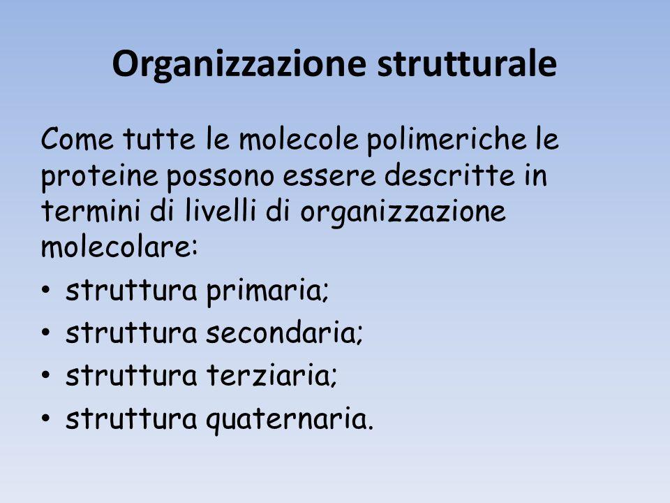 Organizzazione strutturale