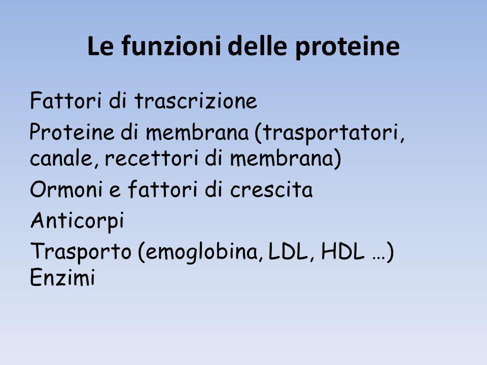 Le funzioni delle proteine