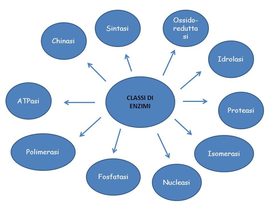 Sintasi Ossido-reduttasi. Chinasi. Idrolasi. CLASSI DI ENZIMI. ATPasi. Proteasi. Polimerasi. Isomerasi.