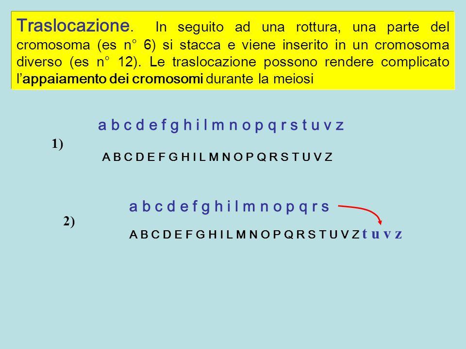 Traslocazione. In seguito ad una rottura, una parte del cromosoma (es n° 6) si stacca e viene inserito in un cromosoma diverso (es n° 12). Le traslocazione possono rendere complicato l'appaiamento dei cromosomi durante la meiosi