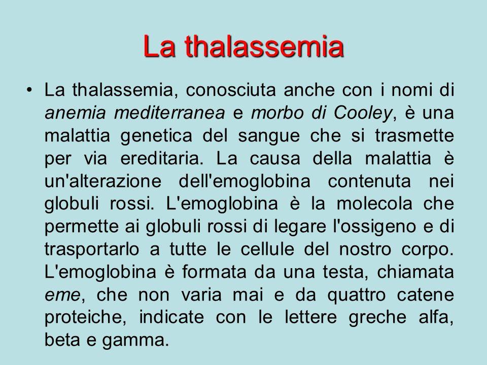 La thalassemia