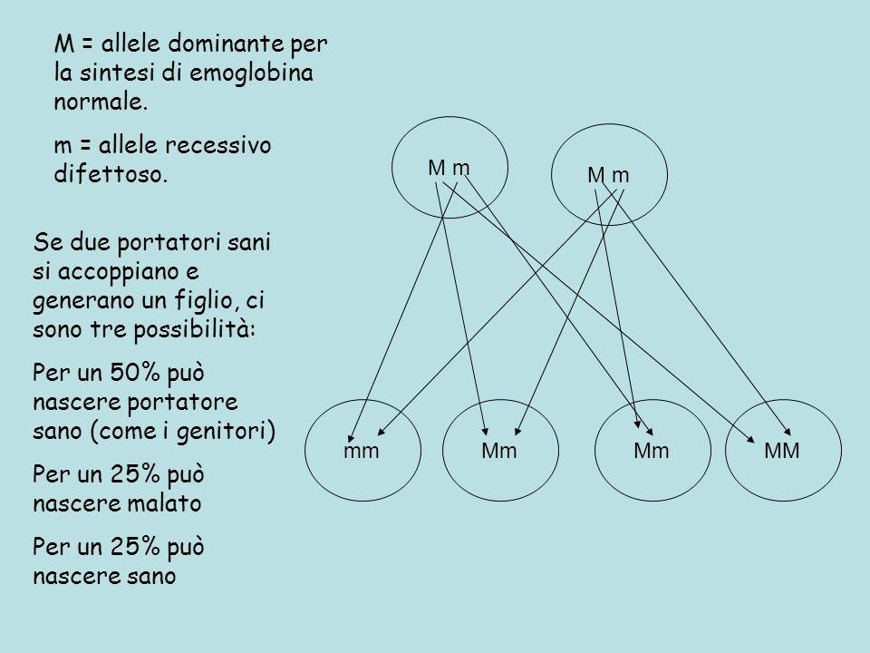 M = allele dominante per la sintesi di emoglobina normale.