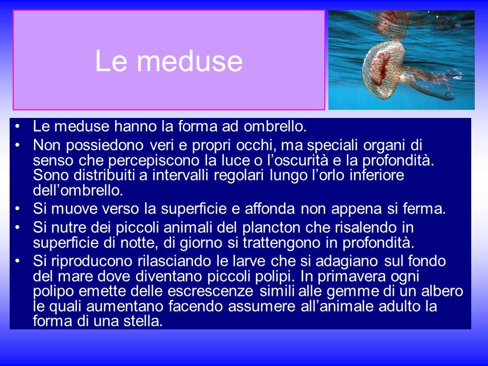 Le meduse Le meduse hanno la forma ad ombrello.
