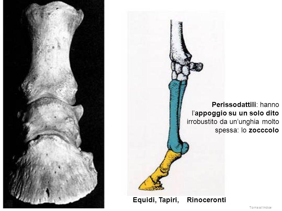 Equidi, Tapiri, Rinoceronti